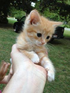 Held...Kitty