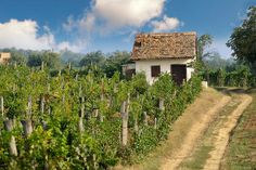Photos, Pictures & Images of The Vineyards of Villany Hungary Wine Country, Country Roads, Dry White Wine, Pictures Images, Hungary, Vineyard, To Go, Hungarian Food, Around The Worlds