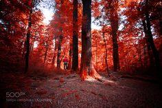 Into the Wood by nazmanm. @go4fotos
