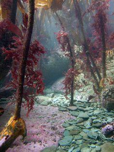 underwater-kelp-forest - GreenPacks.org - GreenPacks