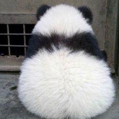 your daily dose of sad panda Panda Love, Cute Panda, Love Bear, Baby Panda Bears, Panda Babies, Baby Pandas, Panda Chow Chow, Cute Baby Animals, Animals And Pets