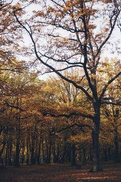 autumn   Agata Gąsek  #autumn #fall