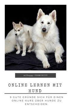 || #Hund || Ideen || #Hunde || Tipps || Tricks || Ideen || Liebe || Welpen || Bilder || #Lernen