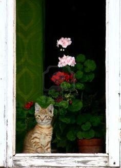 un altro gatto alla finestra