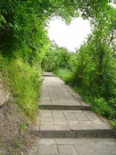 山道のお散歩中に、周囲の樹木がつくったハート型の隙間。 ハート型の空を見上げたら、疲れもふきとびそうです。