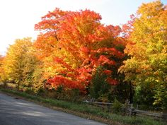 Autumn colours just up the road - photo by Shannon McMullan