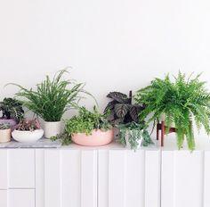 Plants plants plants