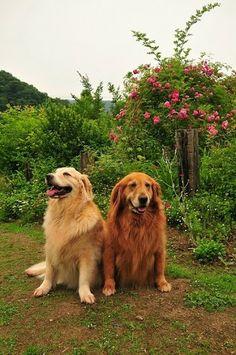 A dog couple!