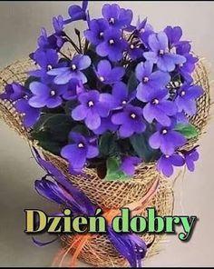 Happy Saturday, Hanukkah, Good Morning, Plants, Humor, Disney, Bom Dia, Fotografia, Friendship