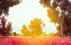 Ralph_Smith_YELLOWSTONE_2013_0120_3.jpg