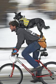 This pretty much trumps a bike leash or bike trailer! A bicycle fit for two…Pete Williams and his backseat driver, Molly, photographed by Pascal Beauvais Photo Velo, Cycling Tights, Bike Style, Tier Fotos, Mans Best Friend, Belle Photo, Dog Life, I Love Dogs, Mountain Biking