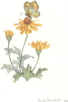 Butterfly with Daises watercolor $37.00