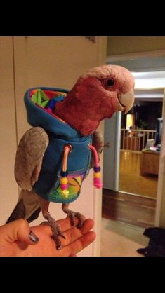Some birds don't parrot all about fashion. But this parrot is different — it has a hoodie!