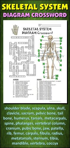 Help students learn and remember the parts of the skeletal system using this diagram crossword. BONUS ACTIVITY: When they've completed the crossword, get them to cut out the diagram, glue it on a separate page and label the parts of the diagram. This activity would work wonderfully within an interactive notebook as well. It can function as an assessment of learning, or it can serve as another reinforcement activity. Afterwards, they have a handy labeled diagram to help them review.: