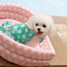 Bowknot Sexy Polka Dot Pet Dog Dress