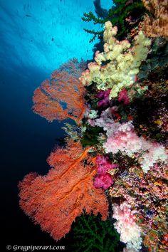 Underwater Beauty Cayman www.passengerpicks.com