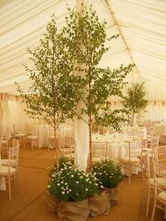 Ideas backyard wedding tent trees for 2019 New Wedding Games, Unique Wedding Venues, Outdoor Wedding Venues, Wedding Events, Destination Wedding, Tent Wedding, Weddings, Indoor Tents, Birch Tree Wedding