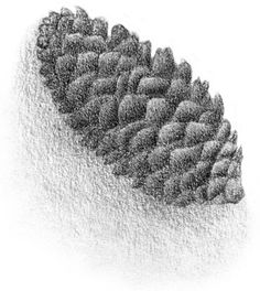 Learn to draw using texture hatching