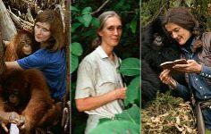 Biruté M. F. Galdikas left-Occupation: Primatologist, Conservationist, Ethologist  Jane Goodall center-Occupation: Primatologist and Anthropologist Dian Fossey right-Occupation: Primatologist, Zoologist, Wildlife Conservationist