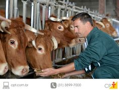 Photo about Closeup on cows being fed by cattleman. Image of middleaged, farmer, breeder - 26818924 Gado Leiteiro, Recipe Images, Stock Photos, Education, Fish Farming, Animales, Farmhouse, Study, Historia