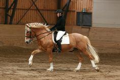 riding finnish horse ~ 1000 Horse