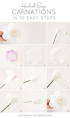 Learn to make Sugar Carnations | Tutorial by Miso Bakes