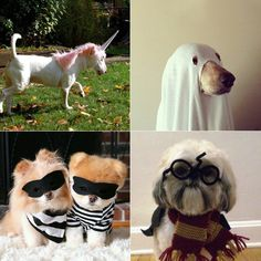 fantasias-para-cachorro-2