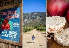 West Coast Style Apple Picking and Apple Pie Cookies – Make & Taste