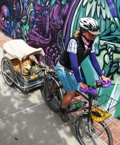 Biking with Dogs. I need to buy a child's seat for Tuesday! Biking With Dog, Gordon Setter, Go Car, Cargo Bike, Kids Seating, Pet Furniture, Dog Accessories, Dog Mom, Pet Care