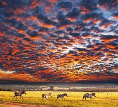 Sonnenuntergang in der Savanne Südafrikas