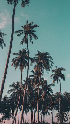Обои с пальмами