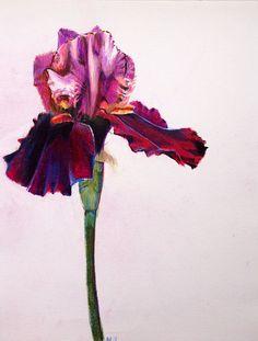 Annie Flynn. Red Velvet Iris Print