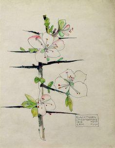 Charles Rennie Mackintosh - Aquarelles Botanique - Prunier sauvage - 1910