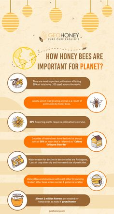 Did you know how honey bees are important for planet? Almost 2 million flowers are needed for honey bees to make 1 pound honey. Honey Bee Facts, Honey Logo, Beekeeping For Beginners, Honey Brand, Honey Packaging, Honey Benefits, Bees And Wasps, Bee Friendly, Cute Bee