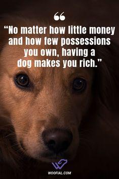 No matter how little money and how few possessions you own, having a dog makes you rich. #dogmemes #puppy #cute #love #dog #doglife #doglovers #doglifestyle #happydog #cutedog #doggo #mamadog #memes #animals #doglover #dogfunny #funnydog #dogquotes #dogfacts