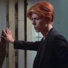 Bowie Ziggy Stardust, David Bowie Ziggy, David Darling, David Bowie Labyrinth, Tony Scott, Pinturas Disney, The Thin White Duke, Paul Mccartney, Music Is Life