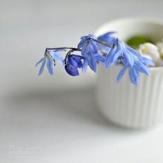 http://www.pienilintu.blogspot.fi/2014/05/happy-flowers.html