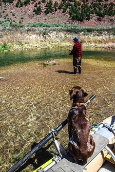 Fly fishing with Chocolate Lab....Doesn't get much better then that!!! #FlyFishingTips