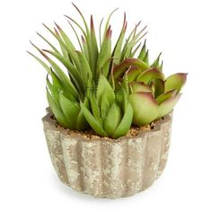 ALLSTATE 'Succulent Garden' Planter ($24) ❤ liked on Polyvore featuring home, outdoors, outdoor decor, outdoor garden decor, garden decor, succulent planter, garden planters and garden patio decor
