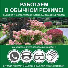Гидропосев газона под ключ | Русские газоны Plants, Flora, Plant, Planting