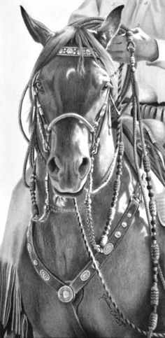 Maria D'Angelo Fine Art In Pencil - Two Rein Tradition