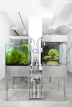 """A deconstructed paludarium - """"Paludarium OSAMU"""" is an installation by Japanese artist Azuma Makoto. He deconstructs a paludarium into side-by-side aquarium and terrestrial plant exhibits that are joined together with technology. Aquarium Stand, Aquarium Setup, Nature Aquarium, Aquarium Design, Saltwater Aquarium, Planted Aquarium, Freshwater Aquarium, Azuma Makoto, Flower Artists"""