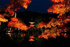 The Osaka, Kyoto and Kobe Golden Route Festival Photography, Japanese Photography, Event Calendar, Japan Fashion, Osaka, Art World, Kyoto, Autumn Leaves, Scenery