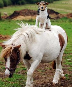 Dog Loves His Pony Rides | Simply Marvelous Horse World
