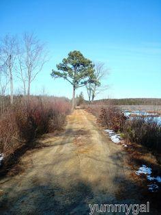 Atlantic County Pine Barrens