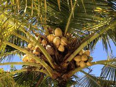 Natürlicher Zeckenschutz mit Kokosöl und ätherischen Ölen | AROMA 1x1 Diy, Tick Bite, Muscle Pain, Diy Home Decor, Healing, Home Remedies, Diy Home Crafts, Insects, Bricolage