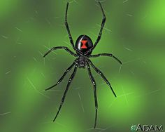 Black widows are notorious mate eaters, and they're hardly alone. Check out these other animals that probably don't celebrate Valentine's Day.