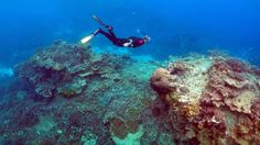 The Great Barrier Reef is in far more peril than previously thought. http://www.motherjones.com/environment/2017/03/stopping-global-warming-only-way-save-great-barrier-reef-scientists-warn?utm_campaign=crowdfire&utm_content=crowdfire&utm_medium=social&utm_source=pinterest