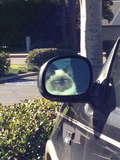 Watching you suspiciously in the wing mirror. | 25 Things Cats Are Secretly ObsessedWith