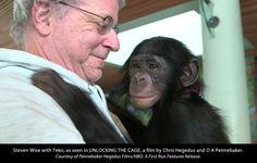 Chimpanzees are animals. But are they 'persons'?  https://www.washingtonpost.com/news/animalia/wp/2017/03/16/chimpanzees-are-animals-but-are-they-persons/?utm_term=.423563decc13